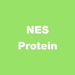 NES Protein
